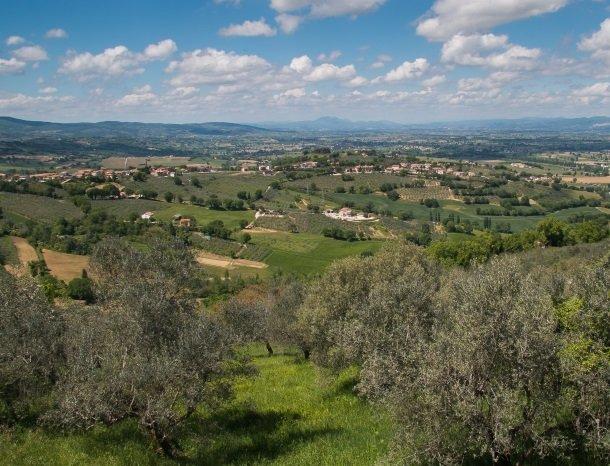 montefalco wijngaarden.jpg