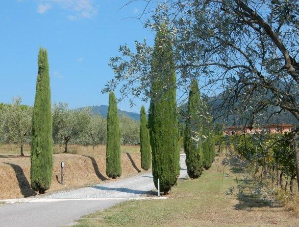 colledibordocheo-lucca-wijngaarden-olijfbomen.jpg