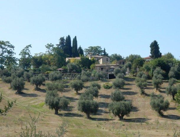 agriturismo-gli-ulivi-cingoli-olijfbomen.jpg
