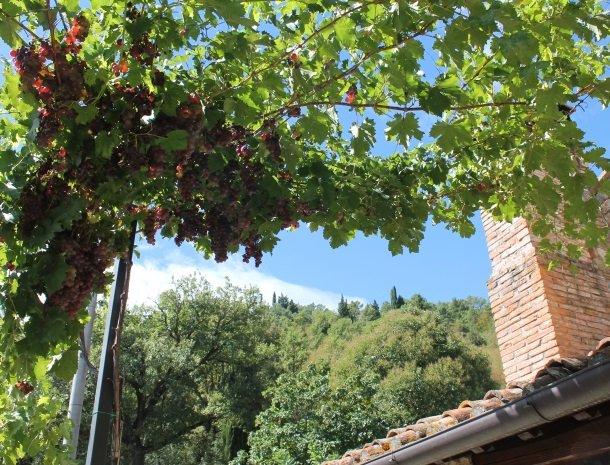 casale-le-pergole-pontassieve-druiven.jpg