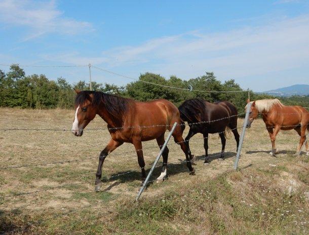 agriturismo-il-felcino-umbrie-paarden.jpg