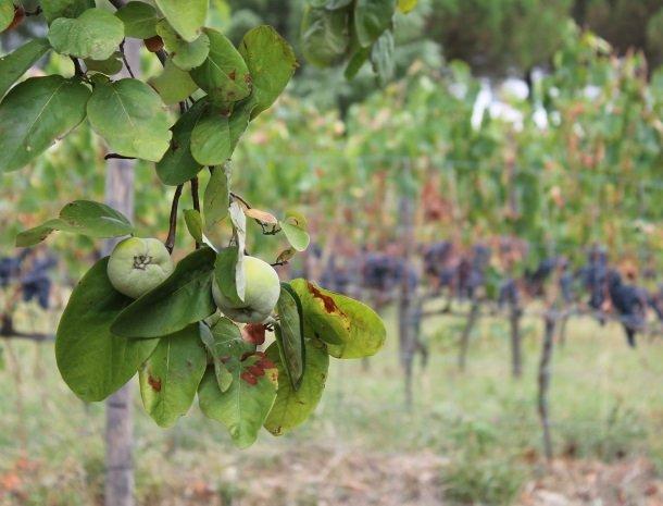 podere-alberese-asciano-toscane-fruit.jpg