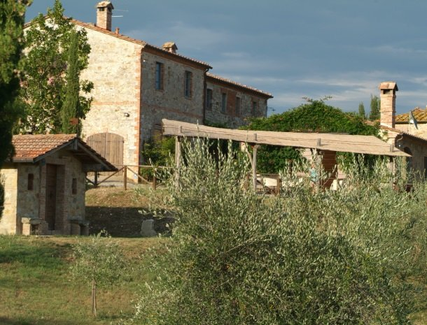 podere-alberese-asciano-toscane-olijfboom.jpg