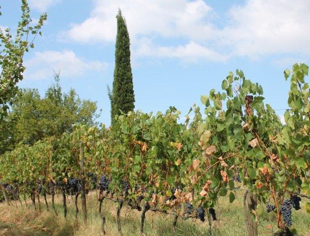 podere-alberese-asciano-toscane-wijngaarden.jpg