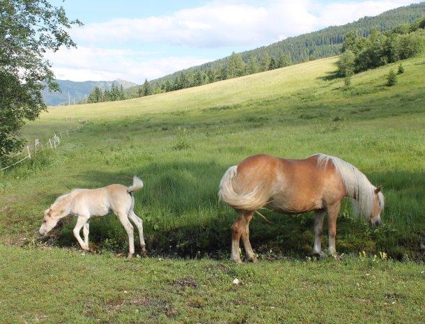 gastehaus elizabeth-paarden.jpg