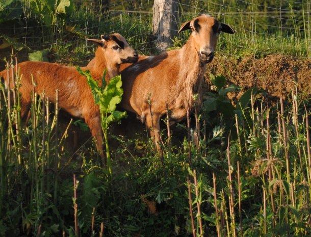 petschnighof-diex-geiten.jpg