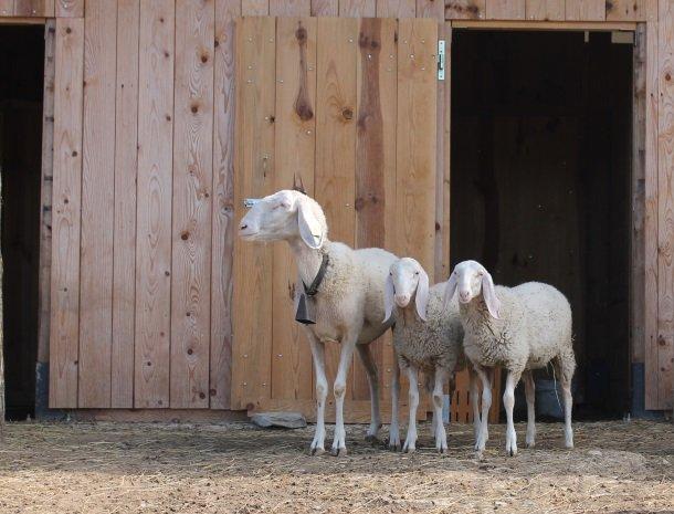 agriturismo-il-giardino-toscane-geiten.jpg