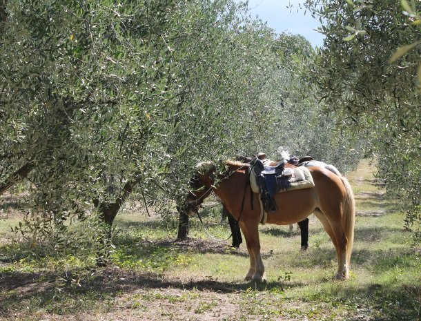 agriturismo-il-giardino-toscane-paard.jpg