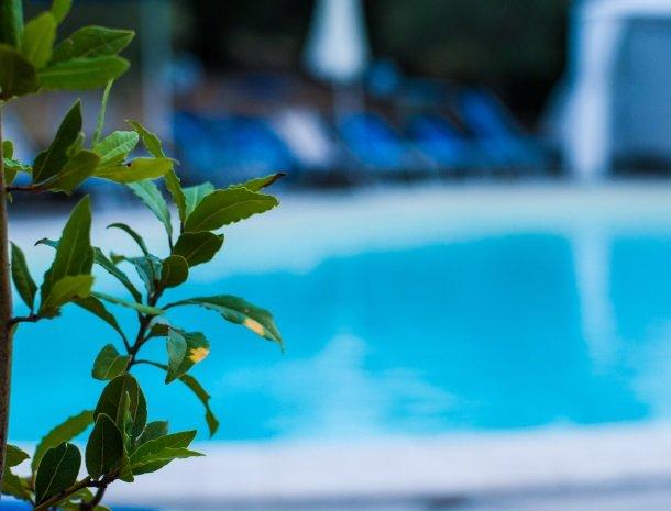 villa-otium-zwembad.-olijf.jpg