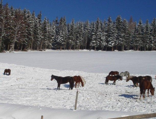 ponyhof-ratten-paarden-winter.jpg