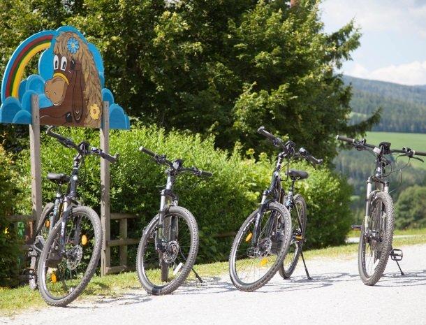 ponyhof-ratten-mountainbikes.jpg