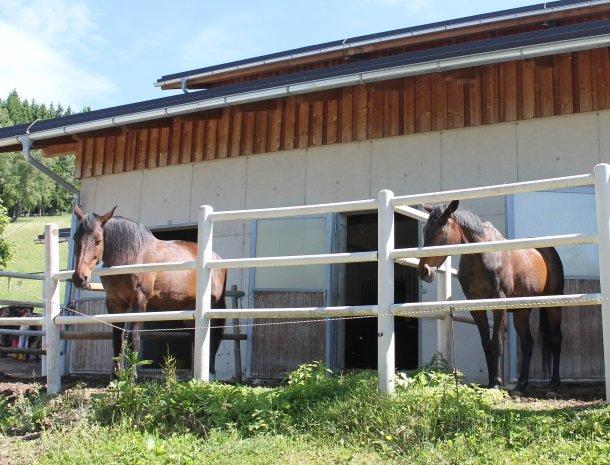 ponyhof-ratten-paarden.jpg