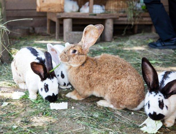 ponyhof-ratten-konijnen.jpg