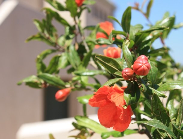 relais-casina-miregia-menfi-bloemen.jpg