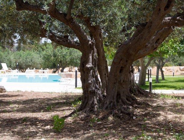 casale la macina-scopello-olijfboom-zwembad.jpg