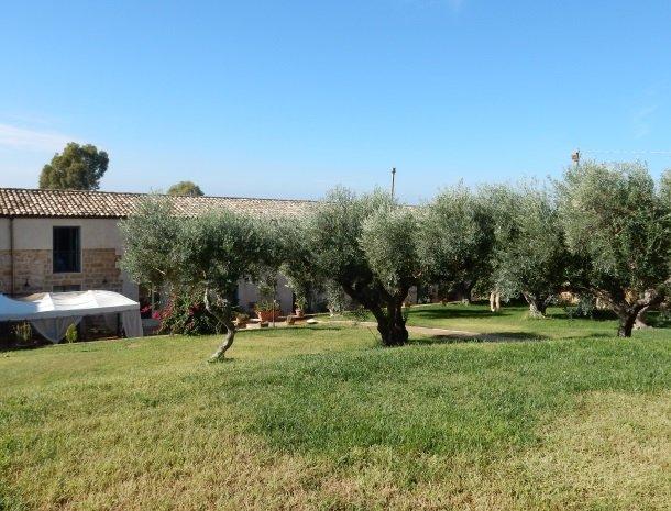 casa mirabile menfi olijfbomen.jpg