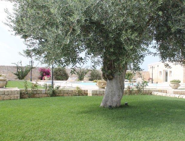 casale1821-ragusa-olijfboom-tuin.jpg