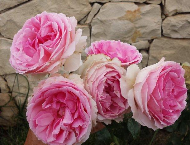 casale1821-ragusa-rozen.jpg