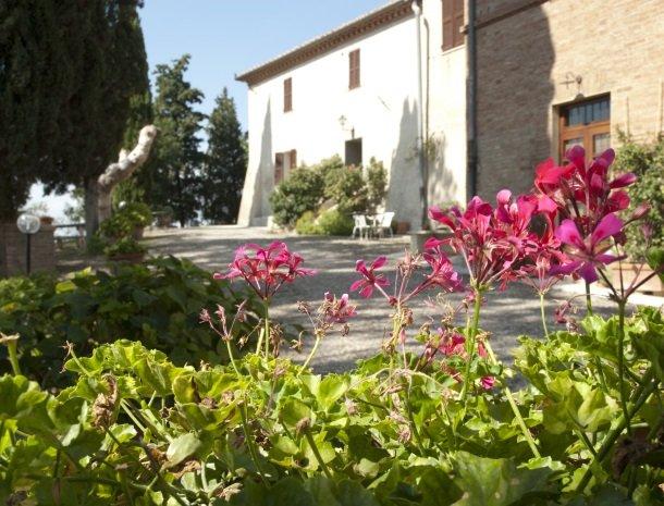 agriturismo-pieve-sprenna-bloemen.jpg
