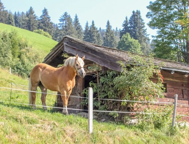 ferienhof-pfefferbauer-hinterglemm-pony.jpg