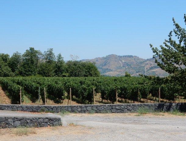 tenuta-scilio-wijngaarden.jpg