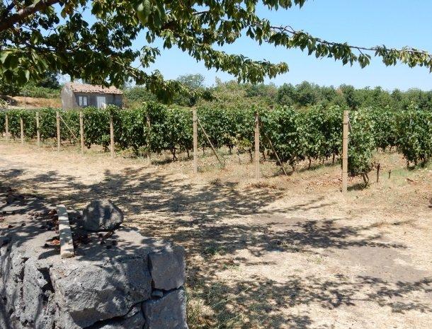 tenuta-scilio-wijngaardenbij-etna.jpg