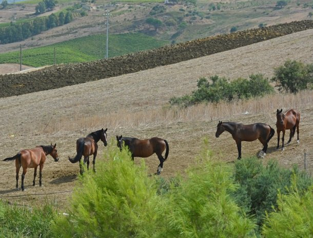 agriturismo-arcudaci-sicilie-paarden.jpg