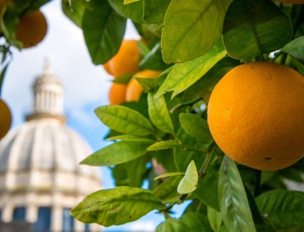 iblainsuite-ragusa-sinaasappel.jpg
