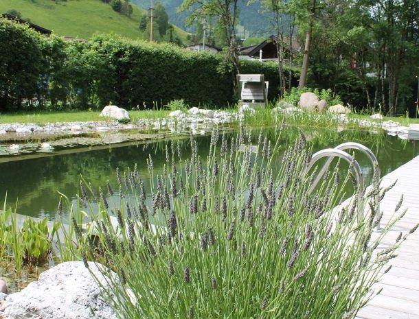 alpenpension-claudia-ellmau-tirol-lavendel.jpg