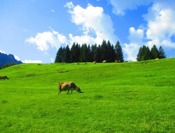 haus-tannhof-jungholz-tirol-omgeving.jpg
