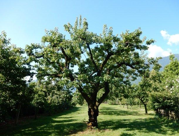 hotel-gruberhof-merano-fruitbomen.jpg