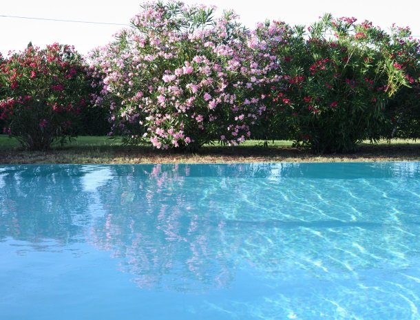 podere-san-giusto-toscane-agriturismo-zwembad-bloemen.jpg