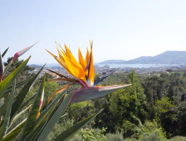 villa-amaranta-la-spezia-ligging-planten.jpg