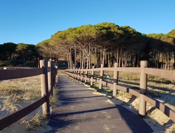 lacona-strand-pijnbomen.jpg