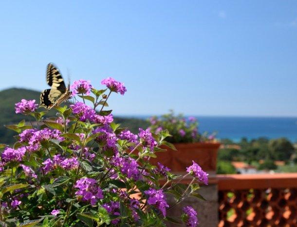 residence-minihotel-lacona-appartementen-vlinder.jpg