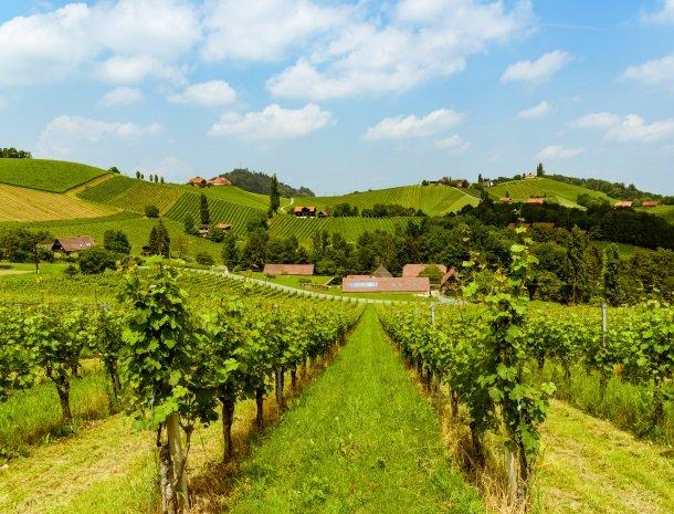 wijngebied steiermark.jpg
