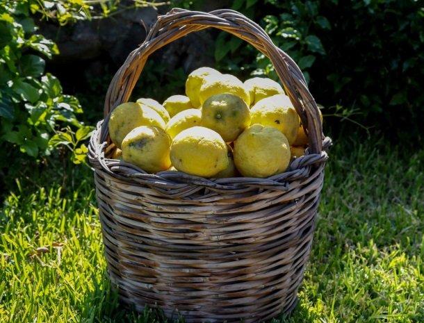 agriturismo-galea-riposto-sicilie-citroenen.jpg