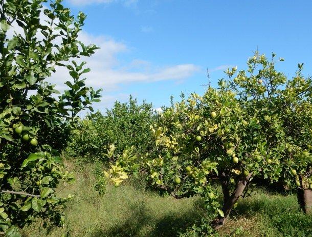 agriturismo-galea-riposto-sicilie-citroenboomgaard.jpg