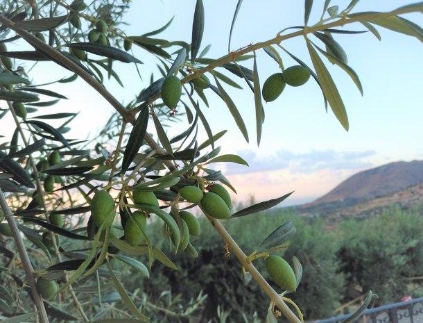agriturismo-le-campanelle-lascari-sicilie-olijven.jpg