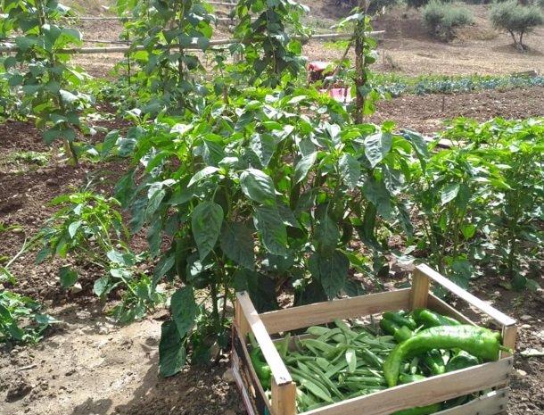 agriturismo-le-campanelle-lascari-sicilie-groentetuin.jpg