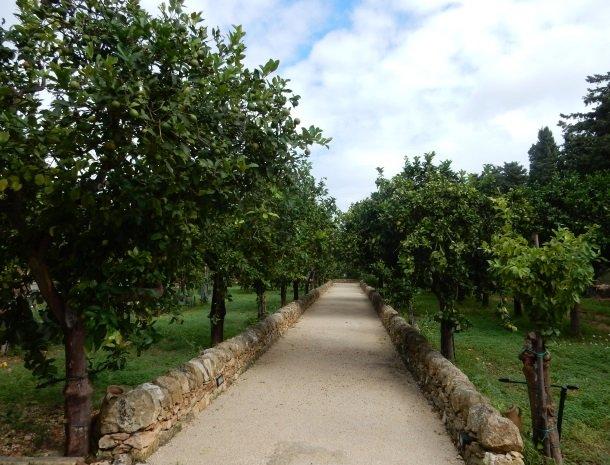 baglio-siciliamo-noto-sicilie-toegang-fruitbomen.jpg