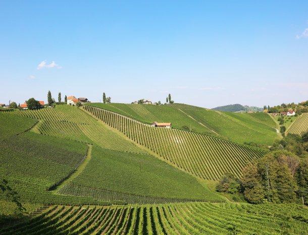 weingut-dreisiebner-steiermark-wijnlandschap.jpg