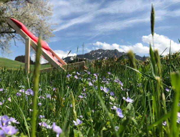am-hof-jungholz-oostenrijk-voorjaar.jpg