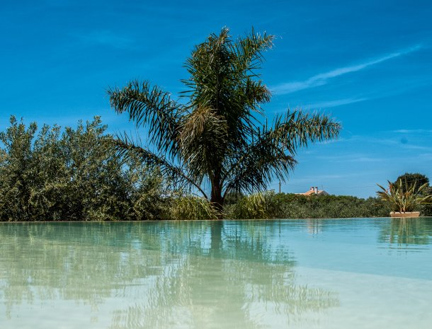 relais-casina-miregia-zwembad-palmboom.jpg
