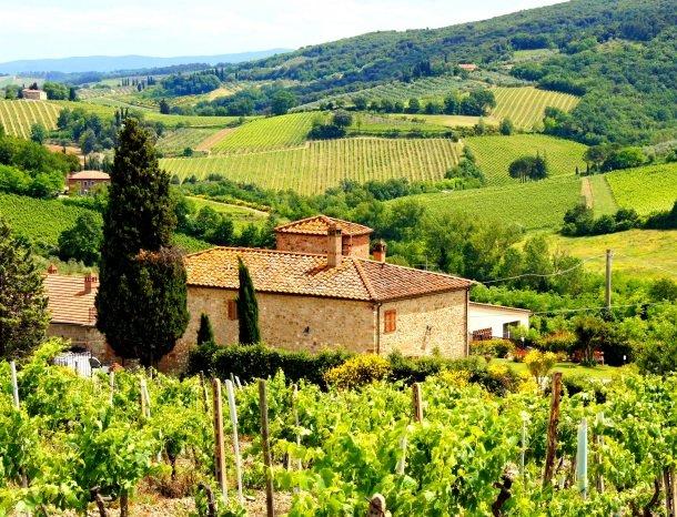 wijngaard-Chianti-toscane