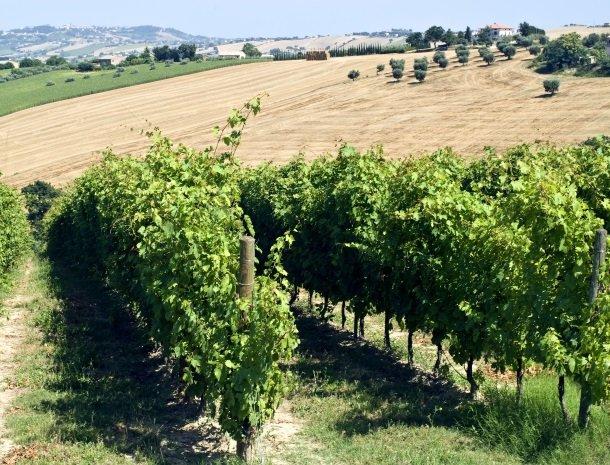 wijngaard-Marche