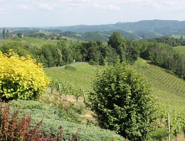 weingut mahorko_steiermark-wijngaarden.jpg