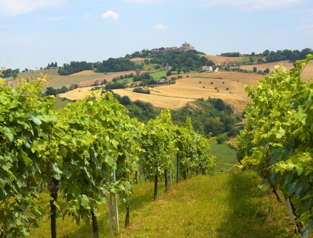marche-wijngaarden-druiven